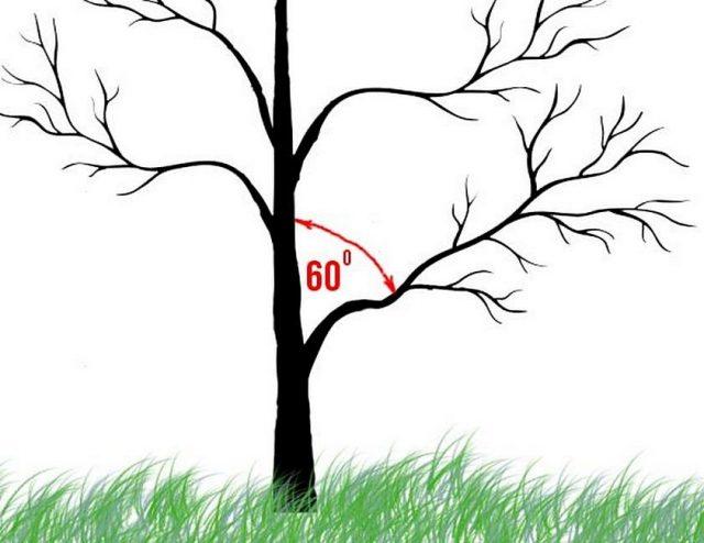 Оптимальным углом нагибания веток будет примерно 60 градусов