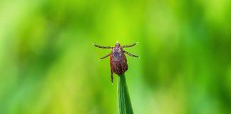 Чем обработать участок от клещей и других насекомых