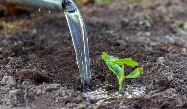 Своевременный полив – залог успеха