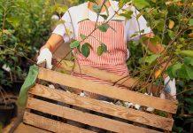 12 вопросов, которые выведут недобросовестного продавца саженцев на чистую воду