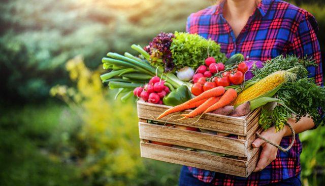Здоровые растения – богатый урожай