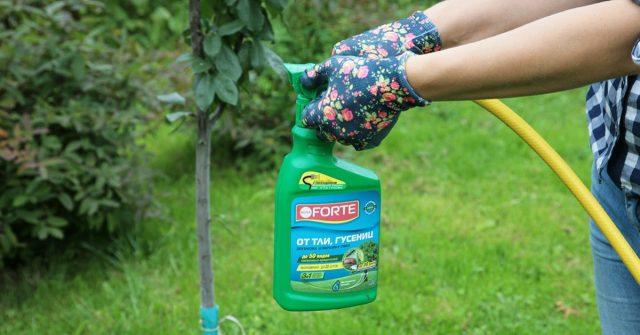 Процесс обработки растений с помощью эжектора