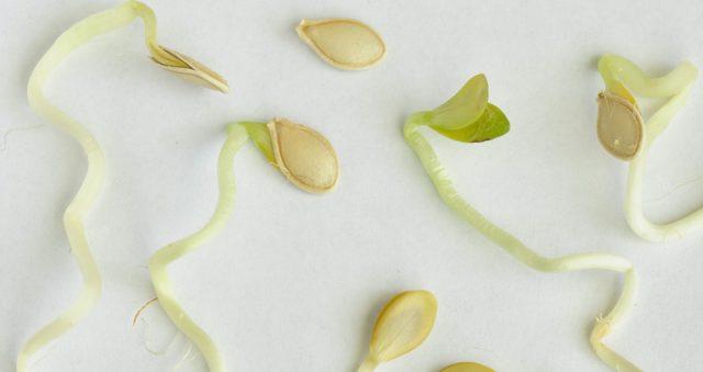 Пророщенные семена тыквы