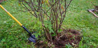 8 причин удалить растение с участка