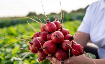 «Восточный деликатес» — находка для гурманов