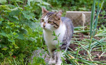 Как отвадить кошек вредить в саду?