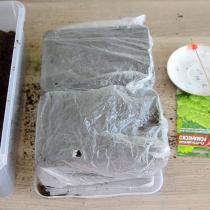 Переносим семена шпажкой и раскладываем их на грунт. Сверху семена присыпаем грунтом. Поливаем обильно грунт еще раз и накрываем полиэтиленовым пакетом для создания эффекта «парничка».