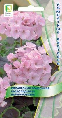 Пеларгония зональная «Шоколадница Нежно-розовая»