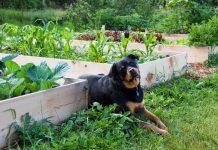 Правила безопасности домашних животных на даче