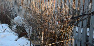 Правила раневесенней обработки кустарников и деревьев от вредителей