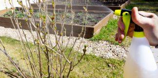 Весенний уход за ягодными кустарниками