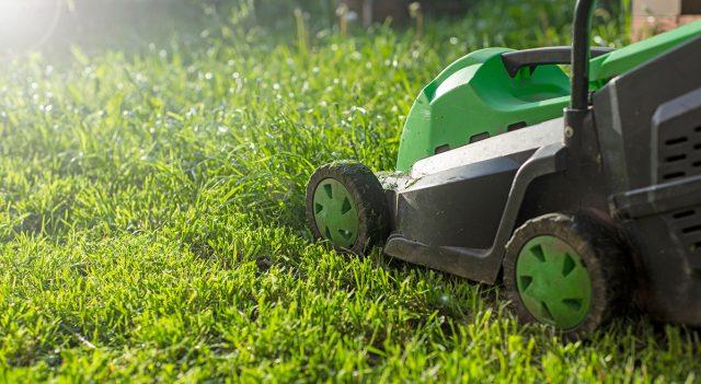 Идеальный газон — и просто, и сложно
