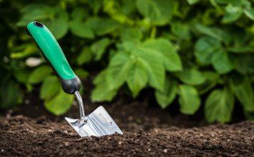 Мелиоранты — важные помощники в саду и огороде