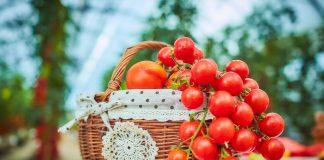 В полном порядке! Болезни томата: профилактика и защита