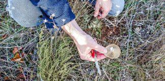 Блюдцевики и вешенки — где найти в лесу весной и что приготовить?