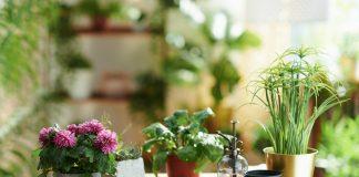 Как безопасно использовать народные средства для комнатных растений?