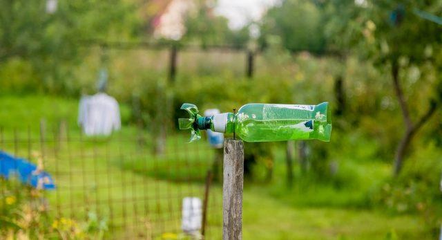 Как избавиться от кротов: экологичная обработка участка