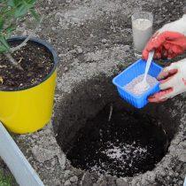 Засыпаем перегной или компост на дно посадочной ямы. Добавляем сухие удобрения