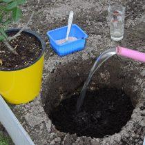 Сверху получившуюся смесь засыпаем плодородным грунтом верхнего слоя почвы и небольшим количеством торфа. Проливаем водой