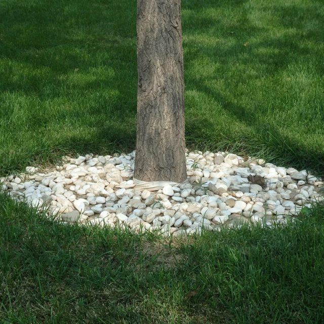 Каменная насыпь на приствольном круге
