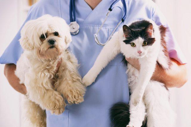 Обязательная вакцинация для домашних животных