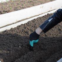 Правила посева моркови для отличного урожая