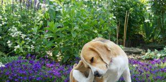 Природная защита домашних животных от блох, комаров и клещей