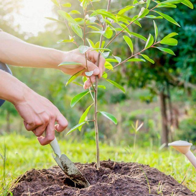 Как выбрать рассаду и сохранить до посадки