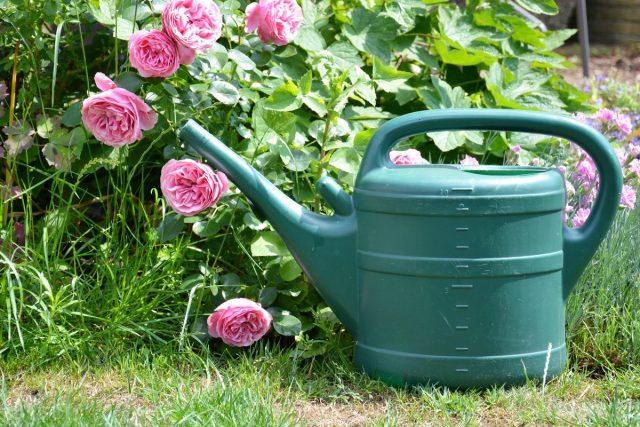 Для более пышного цветения придется проводить подкормки в период всего вегетационного периода