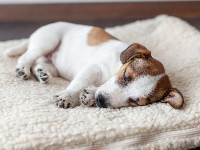 12 вещей, которым нужно научить щенка в первую очередь