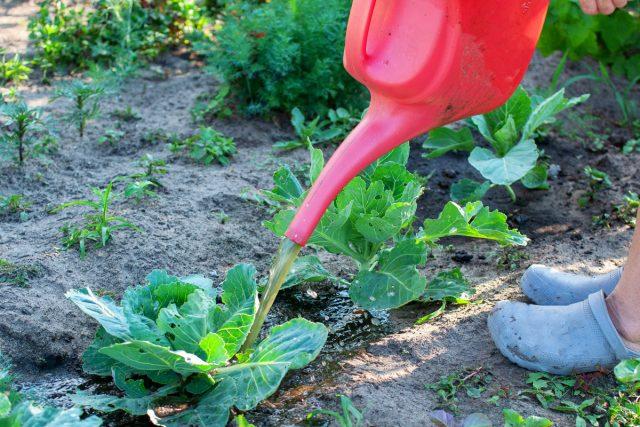 5 лучших органических удобрений для сада и огорода