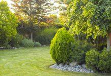 Нужно ли ухаживать за взрослыми декоративными деревьями и кустарниками?