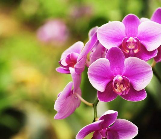 Какой должен быть грунт для орхидей?