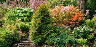 Как укрепить склон с помощью растений?