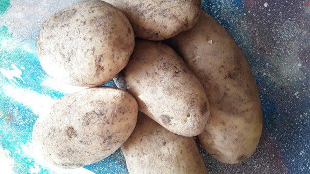 Картошка под сеном: как вырастить без перекопки, мой опыт