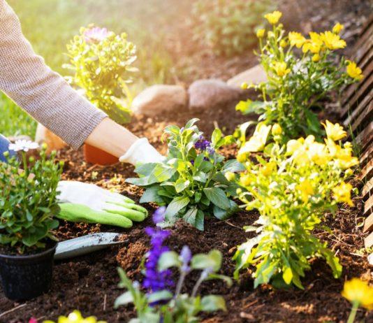 Лунный календарь садовода и огородника на июль 2021