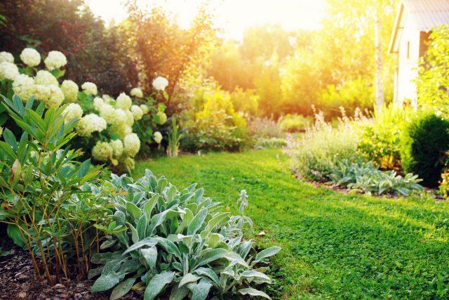 Типы освещенности на участке — как подобрать идеальное место растениям?