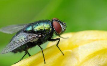 Как избавиться от мух на даче