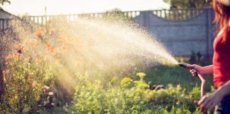 Как помочь растениям в жару
