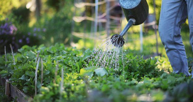 Правильный полив – залог здоровья растений