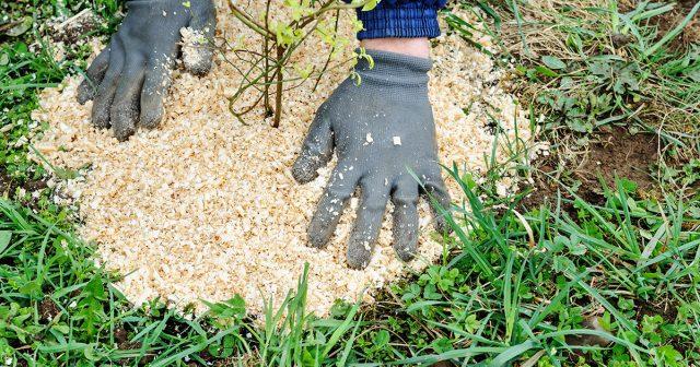 Мульчирование растения опилками