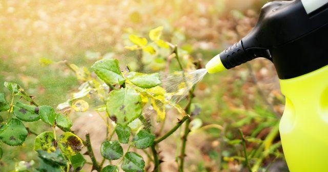 Обработка растений защитными растворами