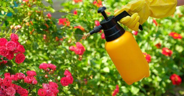 Обработка растений средствами защиты от болезней и вредителей