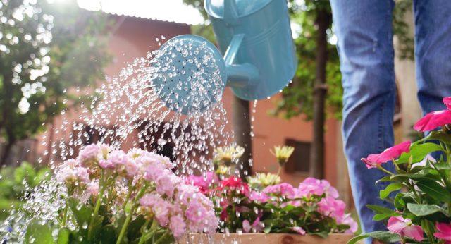 Декоративным растениям важен обильный полив