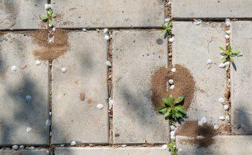 Декоративные дорожки без сорняков и муравьев