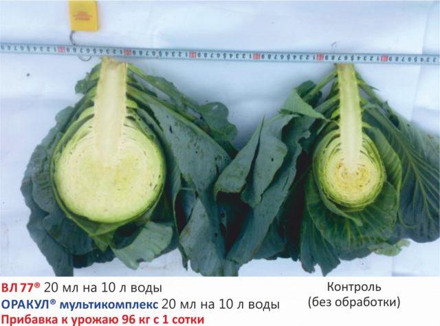 Применение препаратов серии «Оракул» и «ВЛ 77» при выращивании капусты