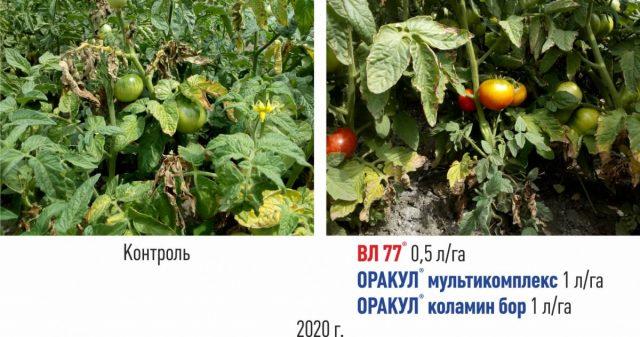 Применение «Коламин Бор» «ВЛ 77» «Оракул мультикомплекс»