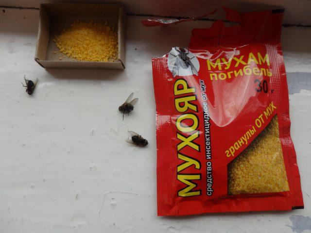 Действие гранул от мух «Мухояр»