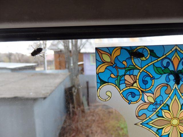 Специализированные витражные наклейки от мух «Мухояр»