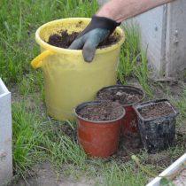 Наполните плодородной землей стаканчики и горшочки объемом не менее 500 мл